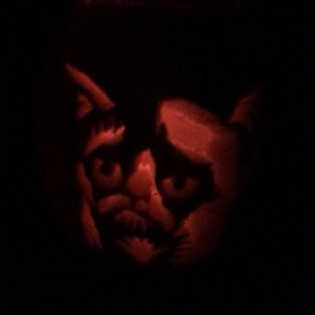 My very own grumpy cat #grumpycat #pumpkin #halloween