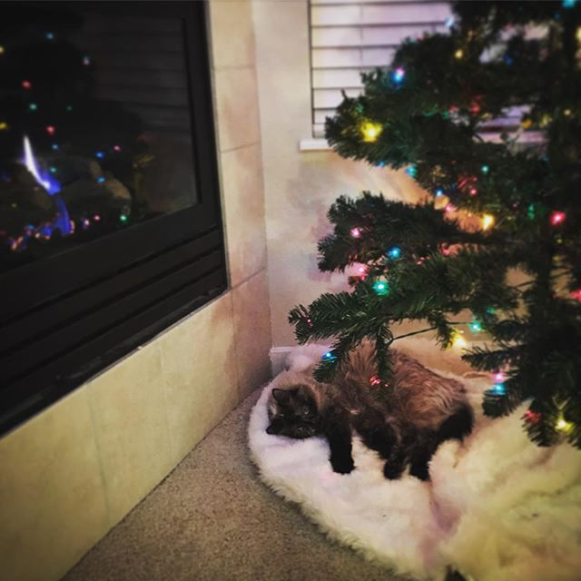 Christmas kitty fireplace warmth flop