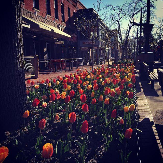 Boulder springtime 🌷🌷🌷🌷🌷🌷